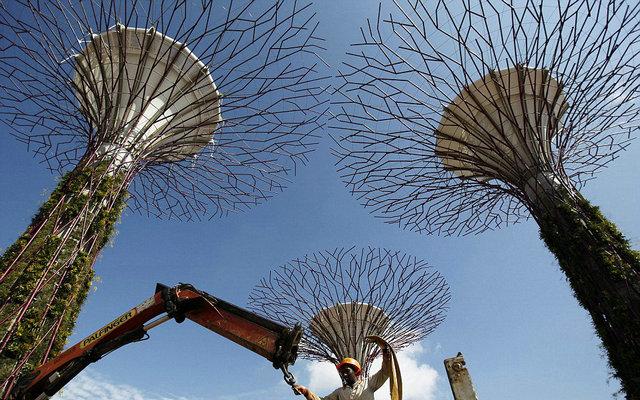 """新加坡""""超级树""""花园"""